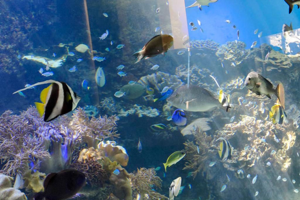 ニューカレドニア_ラグーン水族館